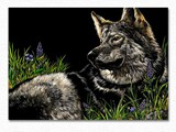 WOLF_N_WILDFLOWERS_scratchboard